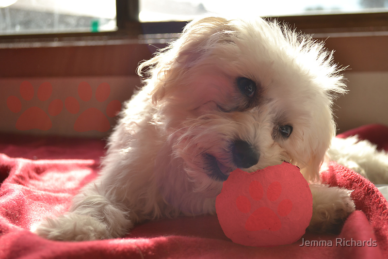 Doggies and thier balls by Jemma Richards