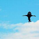 Shark Kite by Karen Checca