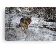 Lone Wolf - Kootenay National Park Canvas Print