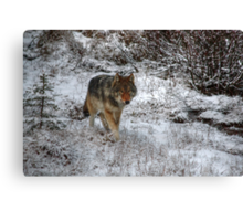 Lone Wolf - Kootenay National Park Canvas Print