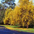 Winter in Drouin - Gippsland by Bev Pascoe