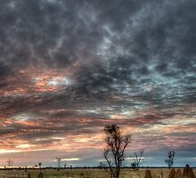 Sunset on the Gibb Road by Dianne English