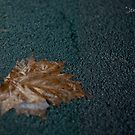 Remnants of an Australian Fall by Jenni Greene