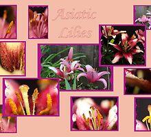 Asiatic Lilies by aprilann