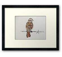 sparrow on barbed wire Framed Print
