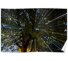 Light Beams In The Trees Poster