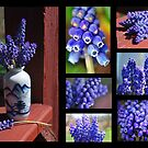 Collection of Grapy Hyacinths by Sheri Nye