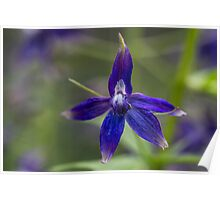 Tiny Blue Flower Close up Poster