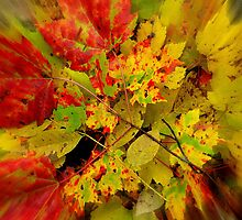 fall leaves by dale54