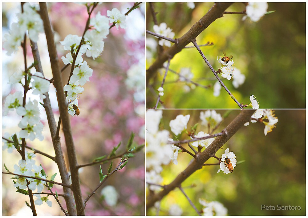 Cherry blossom and bumble bee by Peta Santoro