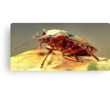 Shield Bug  Canvas Print