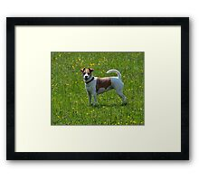 Meet Scully Framed Print
