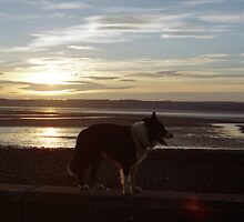 Indy at Sunset by the sea. by Michael Haslam