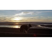 Indy at Sunset by the sea. Photographic Print