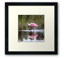 Roseate Spoon Bill on a Walk Framed Print