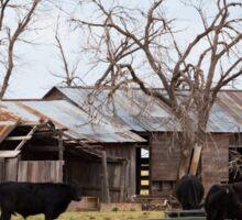 Black cattle Sticker