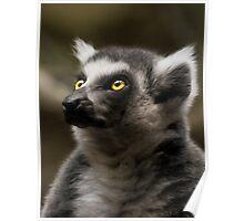 Lemur's eyes Poster