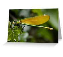 Female Demoiselle Greeting Card