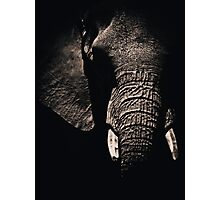 African Elephant Photographic Print