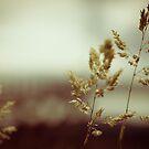 Grass in the rain by lesslinear