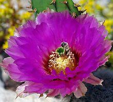 Pollen Diver by Bill Morgenstern
