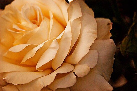 Soft Yellow Beauty by HeavenOnEarth
