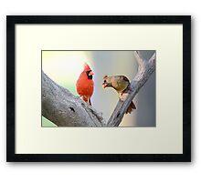 A Redbird's Point of View Framed Print