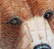 Brown Bear Eyes by ShannonClements