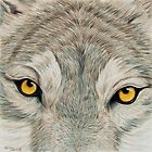Grey Wolf by ShannonClements