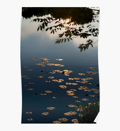 Water Lilies, Poster