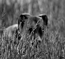 Let The Tall Grass Grow by JeannieBlue