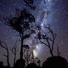 Starry Starry Night by David Haworth