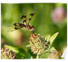 Nashoba Dragonfly Poster