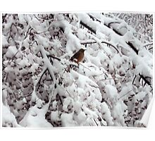 Robin in Snow Covered Crab Apple Tree Poster