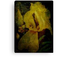 Iris in Texture Canvas Print