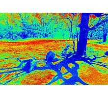 Heat Map Tree Photographic Print
