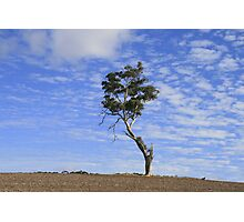 Lonely Tree, Auburn, S.A. Photographic Print