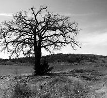 Tilted Tree by Mickey Harkins