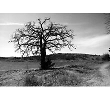 Tilted Tree Photographic Print
