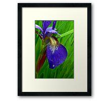 Splendor In The Grass Framed Print