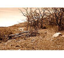 Sepia Landscape Photographic Print