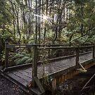 Long Bridge by Shari Mattox-Sherriff