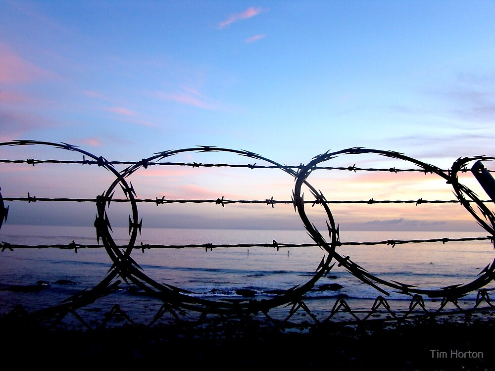 freedom by Tim Horton