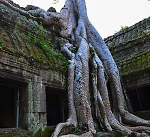 Ta Phrom - Cambodia  by Susan  Chakraborty