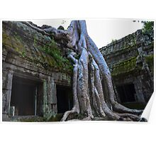 Ta Phrom - Cambodia  Poster