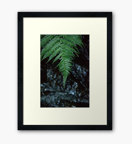 Fern Drop Framed Print