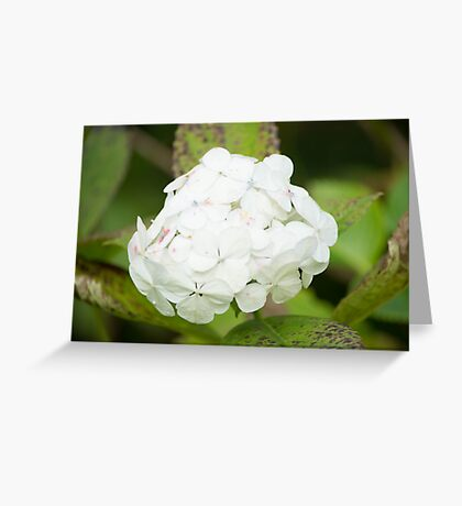 White Flower Ball Greeting Card