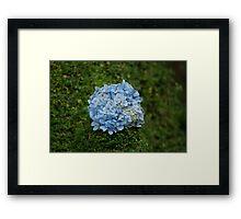 Blue Flower Ball Framed Print