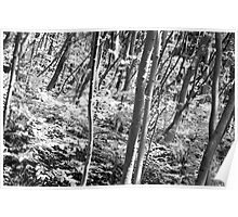 Trees, River Wye Poster