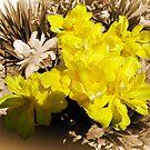 1515-yellow tulip by elvira1